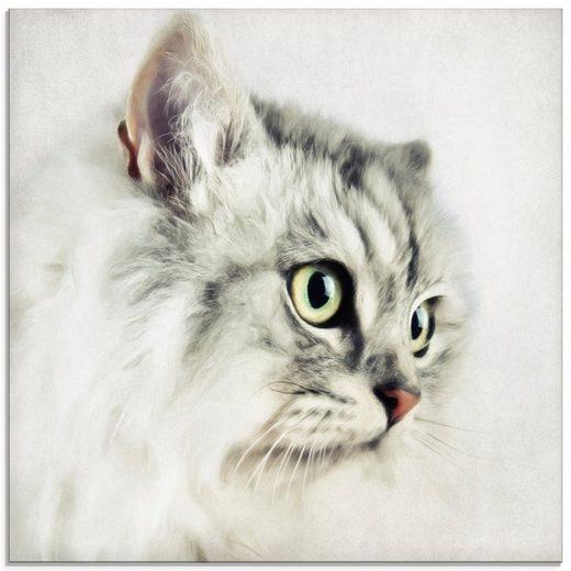 Artland Glasbild »Katzenporträt weiß«, Haustiere (1 Stück)