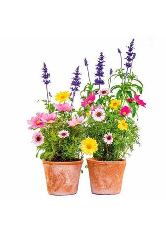 Komar Fensterbild »Blumen« 31x31 cm selbstha...