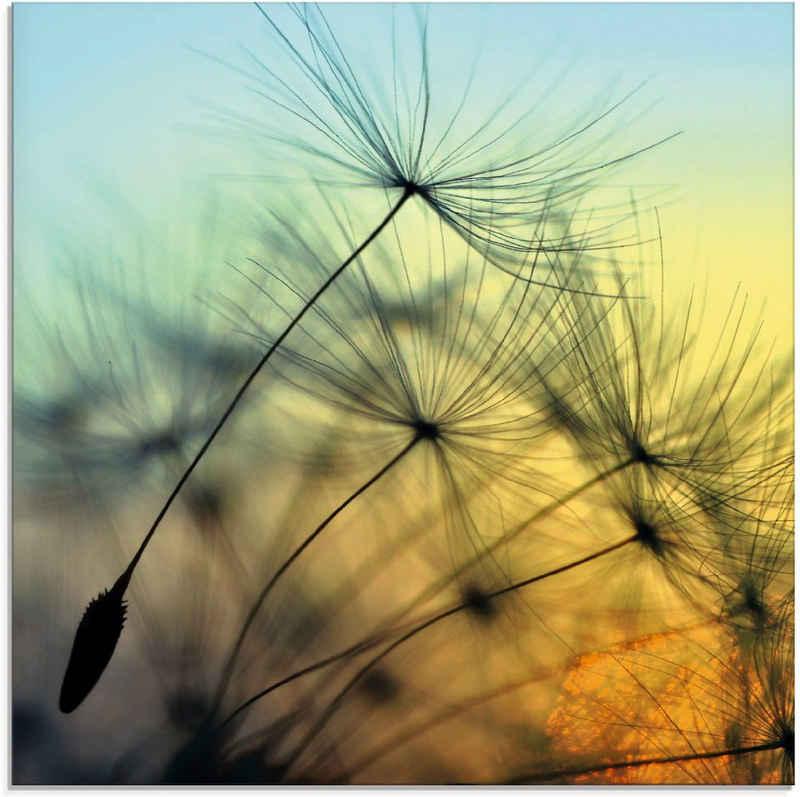 Artland Glasbild »Goldener Sonnenuntergang und Pusteblumen«, Blumen (1 Stück)