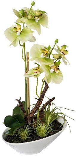Kunstpflanze »Orchideen Arrangement«, im Keramiktopf, H: 36 cm