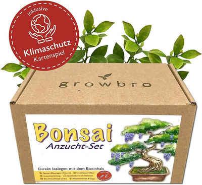 Kunstbonsai »Bonsai – growbro - Wisteria Anzuchtset inkl. Klima-Karten, Züchte deinen eigenen Bonsai-Bro, Geschenke für Frauen und Männer, Bonsai Starter Kit inkl. Samen, Sprühflasche, uvm.«, growbro