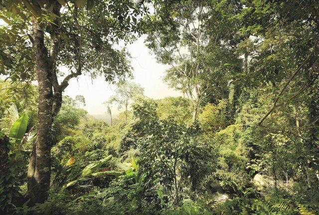Komar Vlies-Fototapete Dschungel 368x248 cm, 4-tlg.
