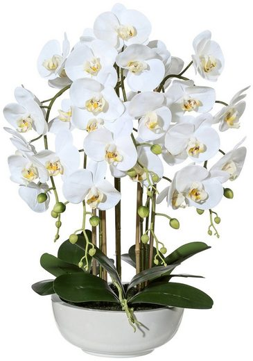 Kunstpflanze »Orchidee Phalaenopsis« Orchidee, Creativ green, Höhe 66 cm, in Keramikschale