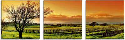 Artland Glasbild »Landschaft mit Weinbergen«, Felder (3 Stück)