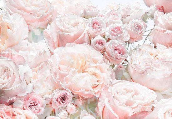 KOMAR Fototapete »Spring Roses«, 8-teilig