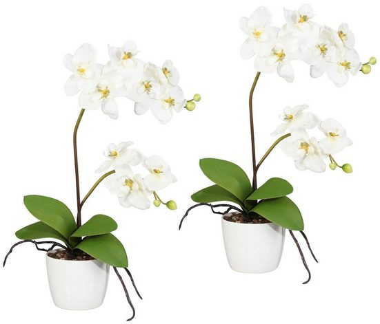 Kunstpflanze »Orchidee Phalaenopsis«, 2er Set im Keramiktopf, H: 60 cm