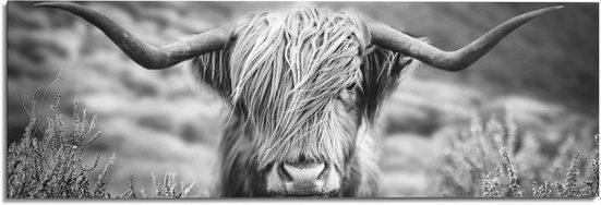 Reinders! Wandbild »Wandbild Highlander Bulle Tiermotiv - Nahaufnahme - Hochlandrind Bild«, Kuh (1 Stück)