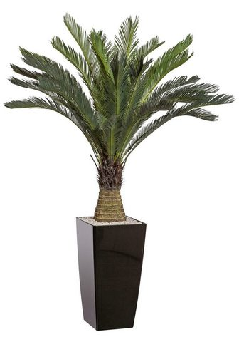 Creativ green Kunstpalme »Cycaspalme« Palme aukštis ...