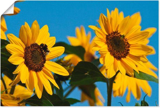 Artland Wandbild »Sonnenblumen«, Blumen (1 Stück)