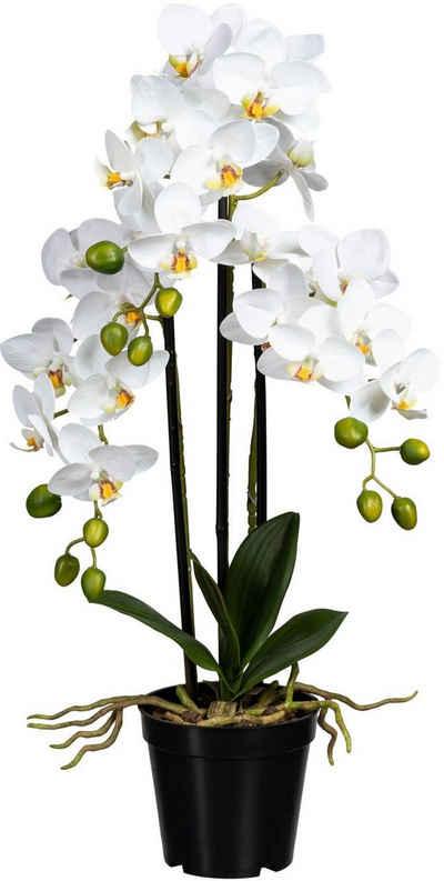 Kunstorchidee »Phalaenopsis« Orchidee Phalaenopsis, Creativ green, Höhe 60 cm