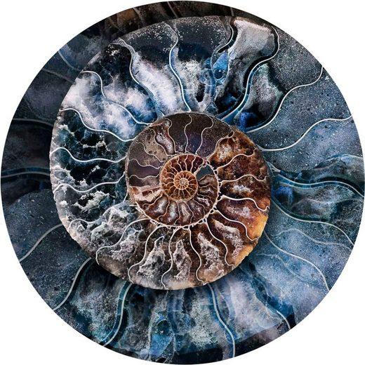 Wandbild »Mandala Muschel - Wandbild«