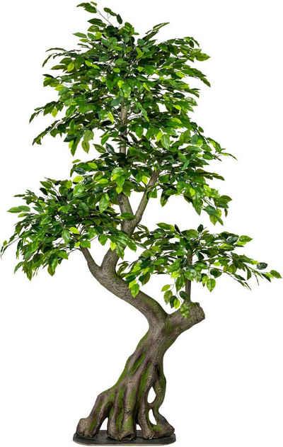 Kunstbaum »Ficus Benjamini« Ficus, Creativ green, Höhe 170 cm