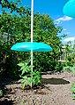 KHW Set: Pflanzenschutzdach »Tomatenhut Basis«, 3 Stk., ØxHöhe: 49x7 cm, inkl. 3 Schläuchen, Bild 3