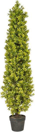 Kunstpflanze »Buchsbaumpyramide« Buchsbaum, Creativ green, Höhe 120 cm, im Kunststofftopf