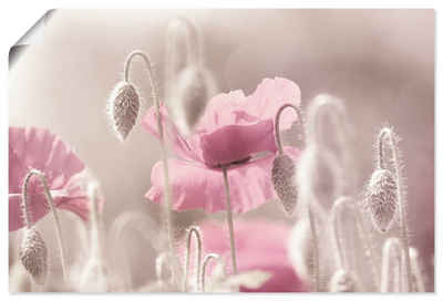 Artland Wandbild »Rosa Mohnblumen Zeit«, Blumen (1 Stück), in vielen Größen & Produktarten - Alubild / Outdoorbild für den Außenbereich, Leinwandbild, Poster, Wandaufkleber / Wandtattoo auch für Badezimmer geeignet