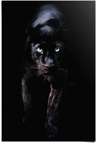 Reinders! Poster »Poster Schwarzer Panther«, Tiere (1 Stück)