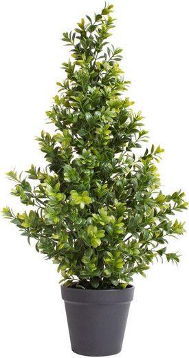 Künstliche Zimmerpflanze »Buchsbaum im Topf« Buchs, Botanic-Haus, Höhe 60 cm