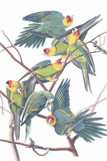 Holzbild »Holzdruck Papageien«, Grün 60x40cm