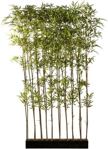Künstliche Zimmerpflanze »Bambusraumteiler« Bambus, Creativ green, Höhe 200 cm, im Holzkasten