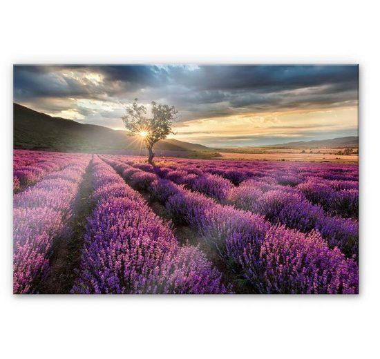 Wall-Art Küchenrückwand »Lavendel Blumen in der Provence«, (1-tlg)