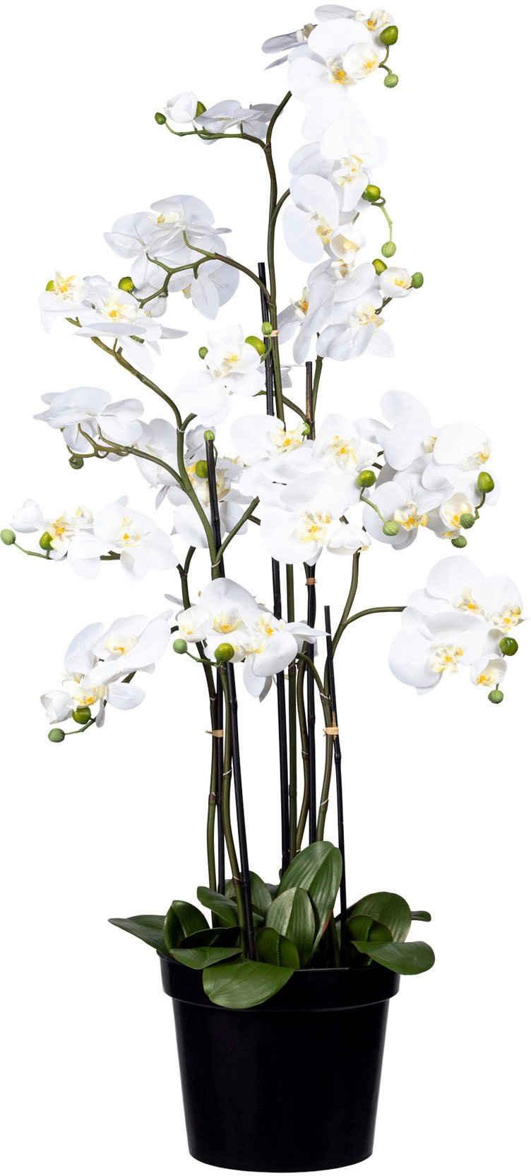 Kunstorchidee »Phalaenopsis« Orchidee Phalaenopsis, Creativ green, Höhe 130 cm