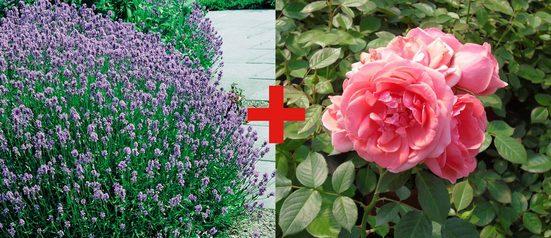 BCM Beetpflanze »Rose Kimono & Lavendel« Set