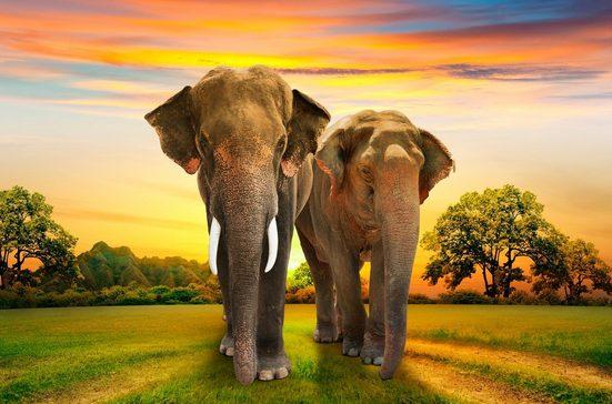 Fototapete »Elephants Family«, glatt