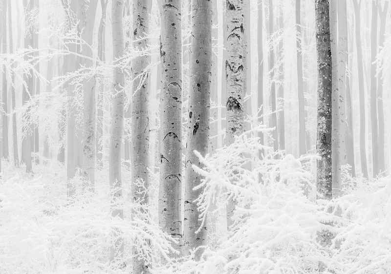 Komar Fototapete »Winter Wood«, glatt, floral, Wald, natürlich, (Packung)
