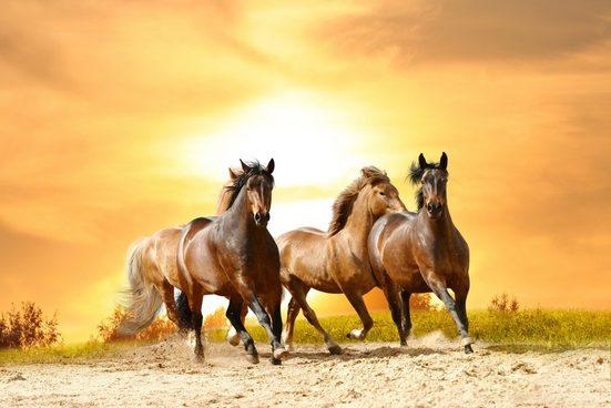 PAPERMOON Fototapete »Horses Run in Sunset«, Vlies, in verschiedenen Größen