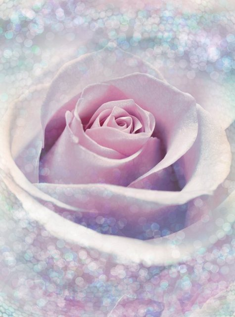 Komar Vlies-Fototapete Delicate Rose 184x248 cm, 2-tlg.