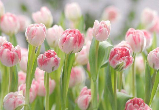 KOMAR Fototapete »Secret Garden«, 8-teilig