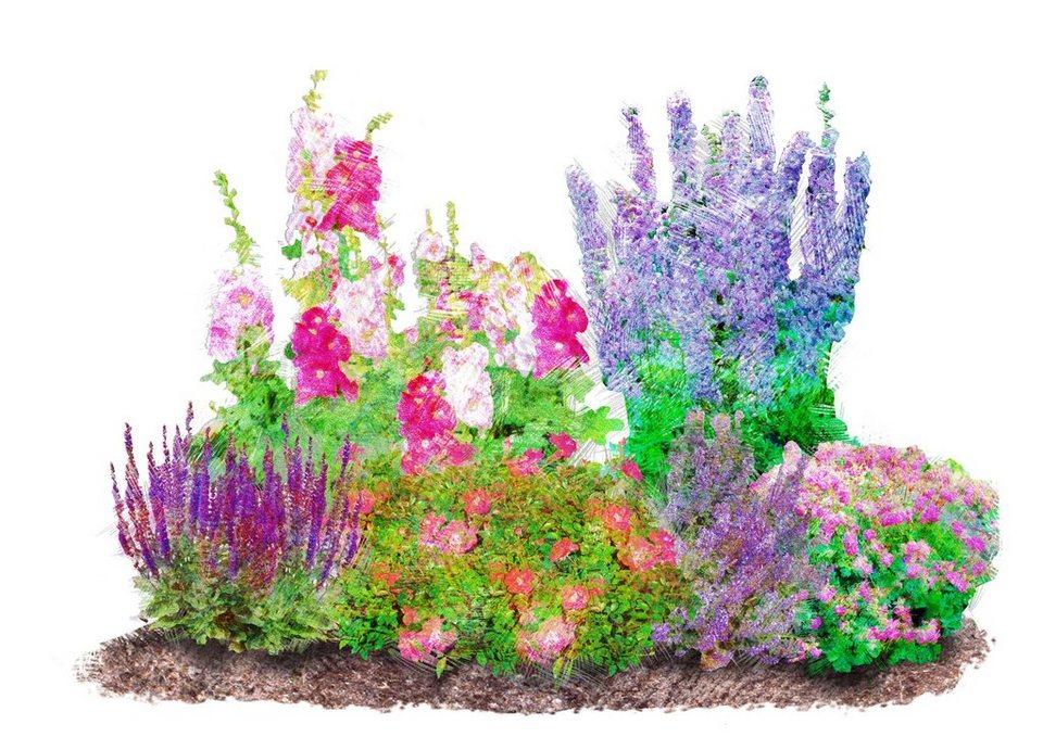 Bcm Beetpflanze Romantischer Garten Set 6 Pflanzen Online Kaufen Otto