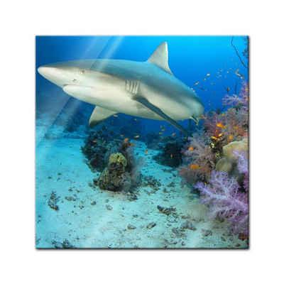 Bilderdepot24 Glasbild, Hai