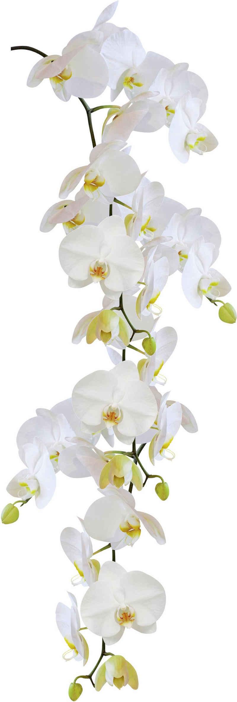 Kleine Wolke Fensterbild »Statics Orchid«, BxH: 23x68 cm, selbsthaftend