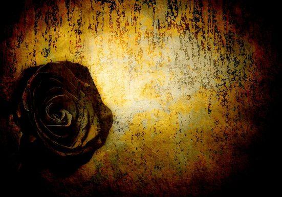 CONSALNET Papiertapete »Schwarze Rose«, in verschiedenen Größen
