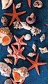 good morning Strandtuch »Sea Star« (1-St), mit Seesternen und Muscheln, Bild 1