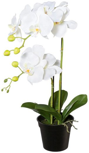 Kunstpflanze »Orchidee Phalaenopsis«, im Kunststofftopf, H: 55 cm, weiß