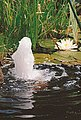 UBBINK Springbrunnenpumpe »Elimax 4000«, 4.100 l/h, Bild 4