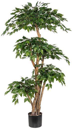 Kunstpflanze »Ficus Benjamini«, Creativ green, Höhe 170 cm